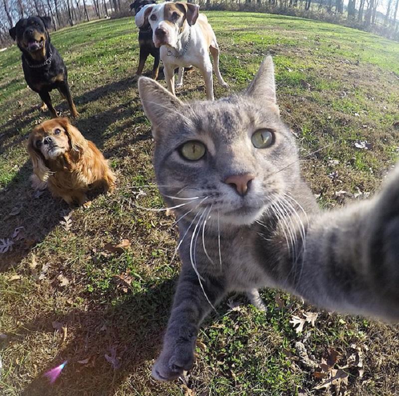 貓咪自己學會自拍 拍得比很多人類還好