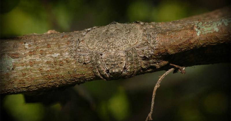 這種樹木你千萬不要碰 上面蜘蛛還原超噁...網:從頭皮發麻到腳底
