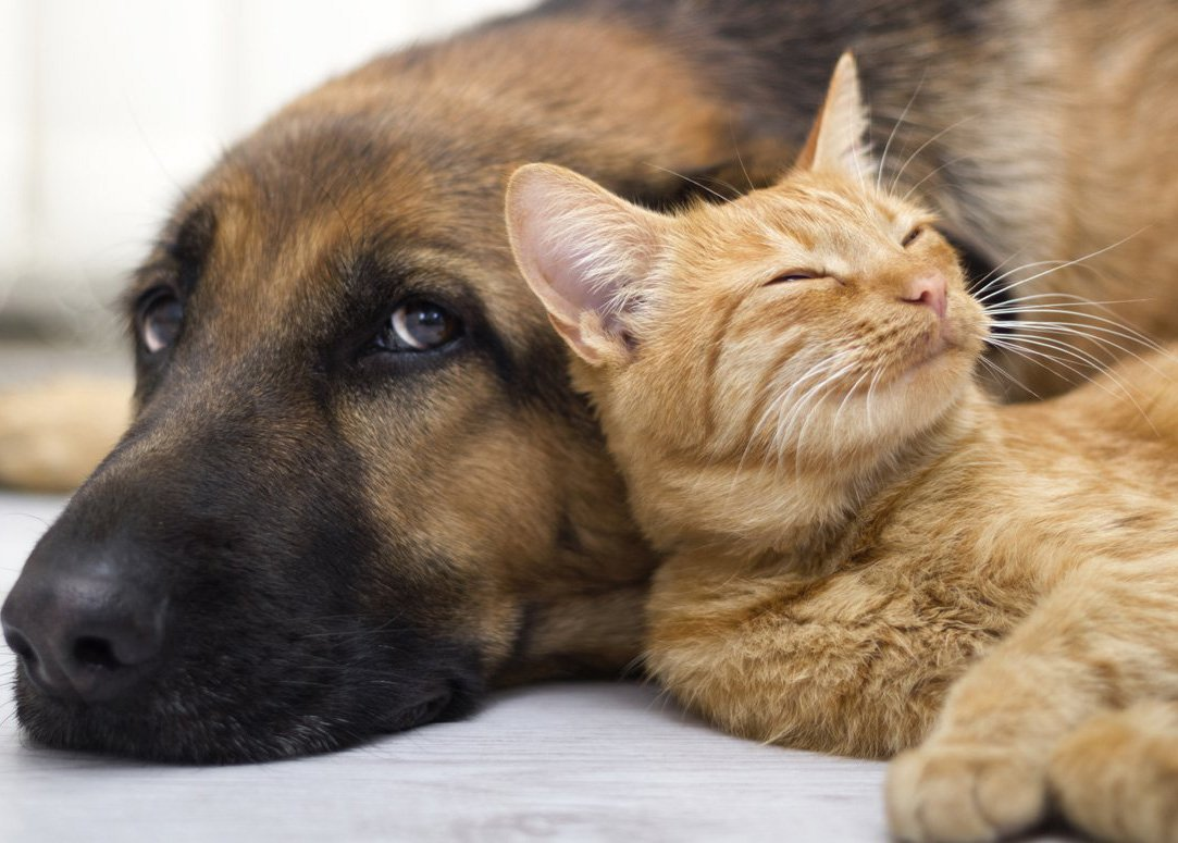 """I don't """"give"""" de-worming medicines to my dog, I put them down on the floor and """"take"""" them from him. I guard them, get between them and him, and tell him not to touch them. He gulps them down before I can fake-take them from him.""""- TheAwakened  """"If I want my cat to jump up for cuddles I first have to act totally disinterested and like I don't care what he does. Works every time.""""- Smiling Sycophant"""