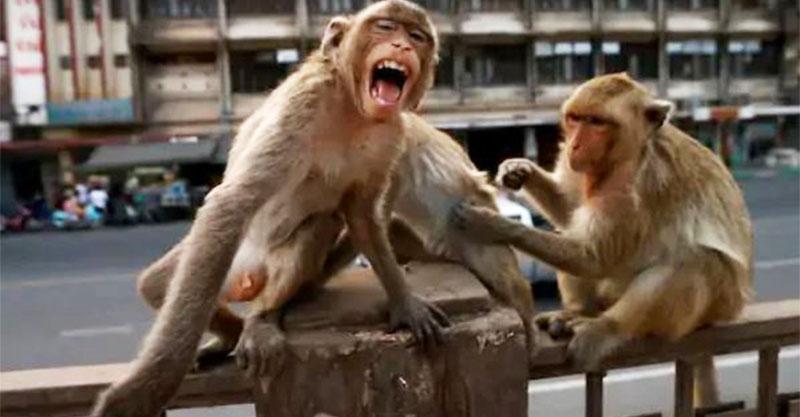 2猴闖實驗室「偷武肺病毒」研究員嚇到拿「手機錄影」被罵爆!
